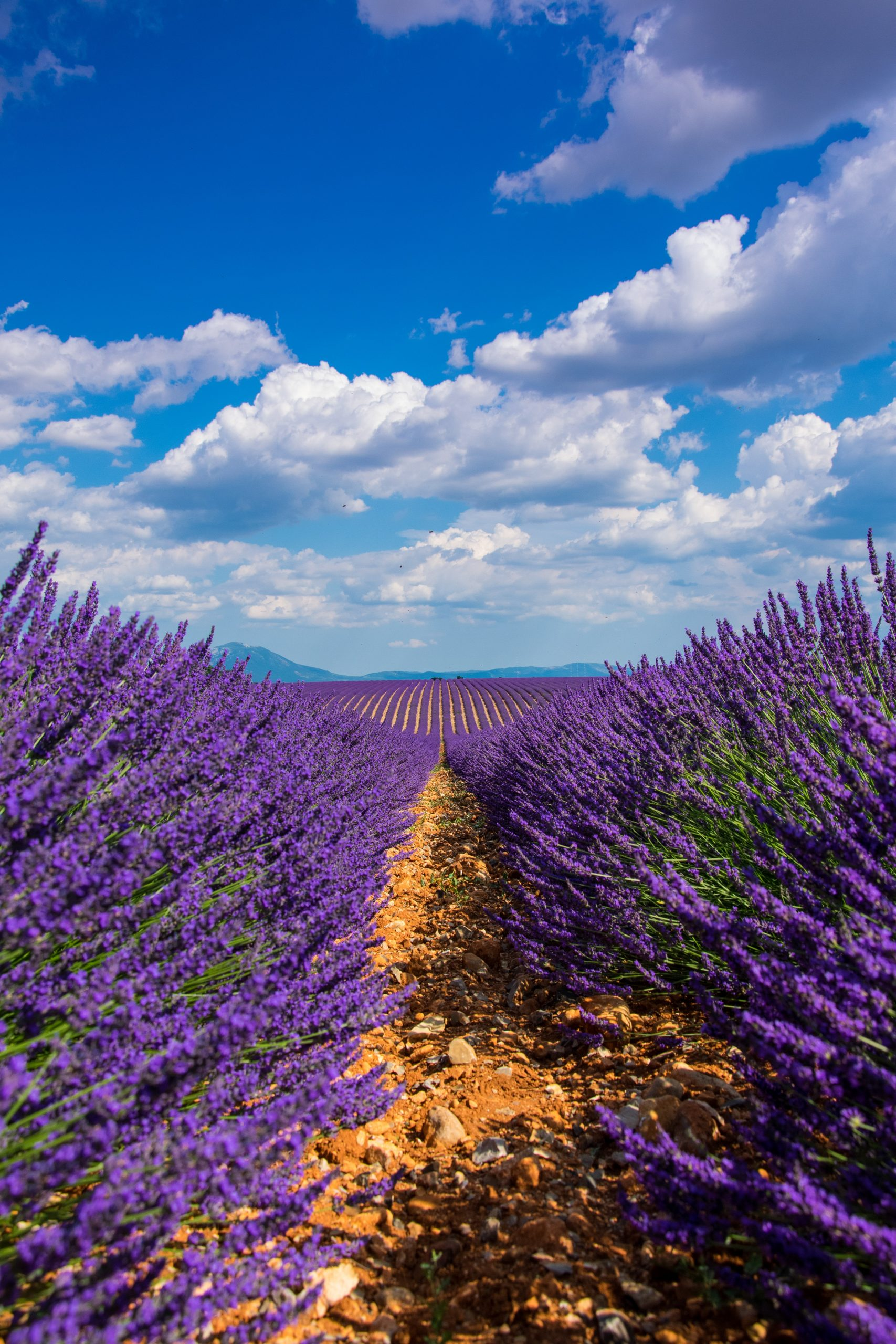 Floviva Lavender Hydrolat
